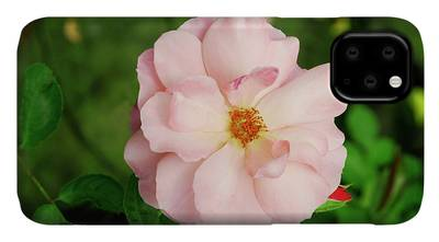 Botticelli Photographs iPhone Cases