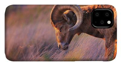 Rocky Mountain Bighorn Sheep iPhone 11 Cases
