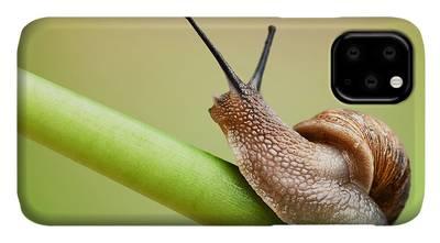 Invertebrates iPhone Cases