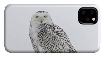 Snowy Owls pattern (Bubo scandiacus) iPhone 11 case