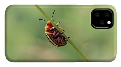 3 sepia Cicadas iPhone 11 case
