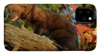 Fisher Cat Iphone Cases Fine Art America