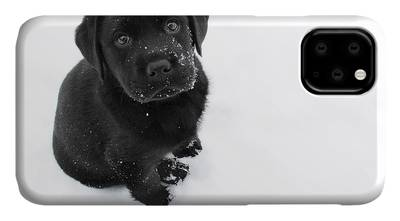 Black Lab iPhone Cases