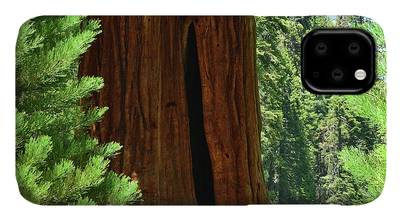 Trail Of 100 Giants iPhone Cases