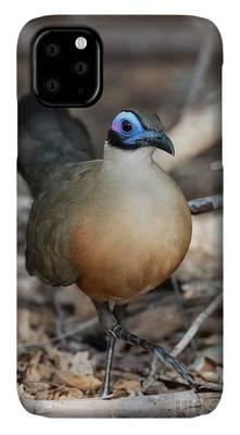 Cuculiformes Photographs iPhone Cases
