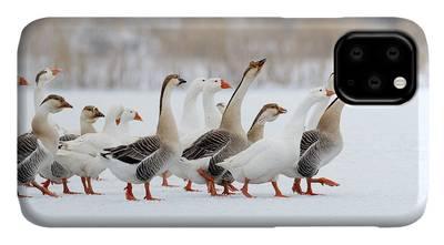 Ornithology iPhone Cases