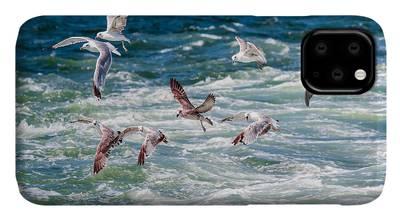 Gulls iPhone Cases