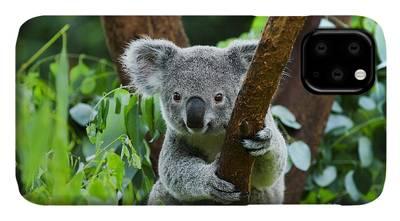 Endangered Species iPhone Cases