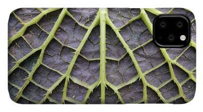 Nymphaeaceae iPhone Cases