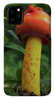 Lizard Photographs iPhone Cases