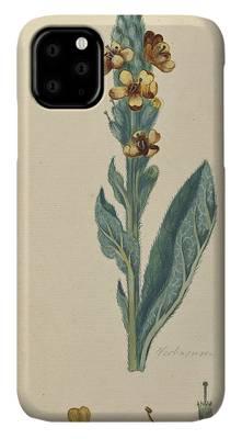 A Curious Herbal Quinces ELIZABETH BLACKWELL  Vintage Botanical Poster