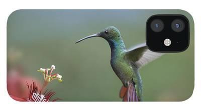 Kolibri Iphone Cases Fine Art America
