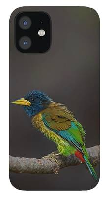 Song Bird iPhone Cases