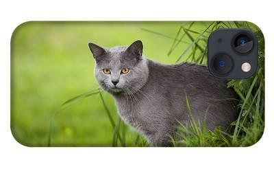 Chartreux iPhone Cases