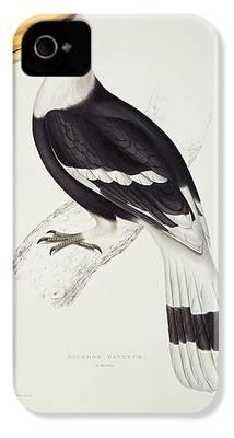 Hornbill iPhone 4 Cases