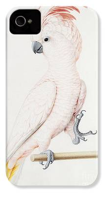 Parakeet iPhone 4 Cases