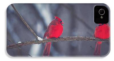Cardinal iPhone 4s Cases