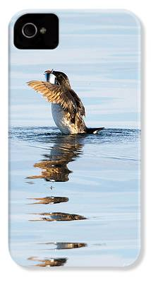 Auklets iPhone 4s Cases