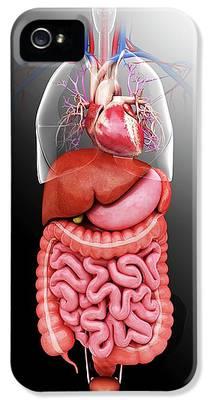 Sigmoid Colon iPhone 5 Cases