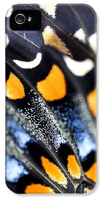 Swallowtail Butterfly iPhone 5 Cases