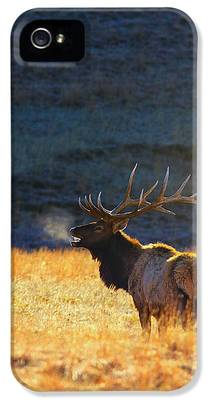 Wyoming iPhone 5 Cases