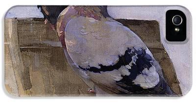 Pigeon IPhone 5 Cases