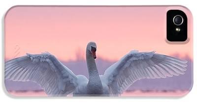 Swan iPhone 5 Cases