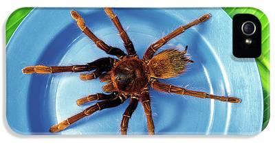 Goliath Bird Eating Spider Iphone 5 Cases Fine Art America