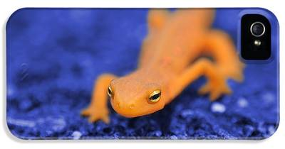 Salamander IPhone 5 Cases