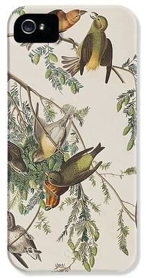 Crossbill iPhone 5 Cases