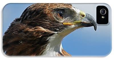 Hawk IPhone 5 Cases