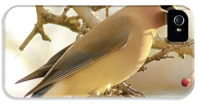 Cedar Waxing iPhone 5 Cases