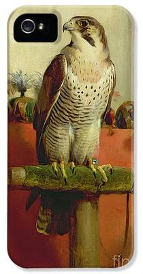 Falcon IPhone 5 Cases