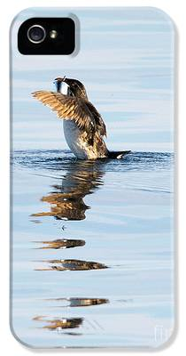 Auklets iPhone 5 Cases