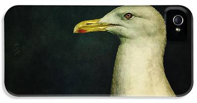 Seagull IPhone 5 Cases