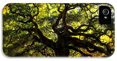 James Island Tree iPhone 5 Cases