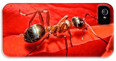 Ant IPhone 5 Cases
