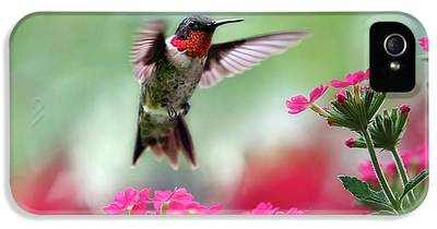 Garden Bird iPhone 5 Cases