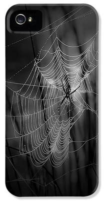 Spider IPhone 5 Cases