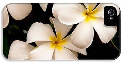 Yellow And White Plumeria Flower Frangipani iPhone 5 Cases