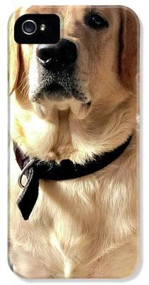 Labrador Dog iPhone 5 Cases
