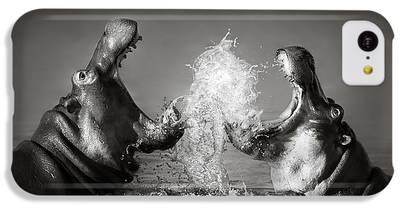 Hippopotamus iPhone 5C Cases