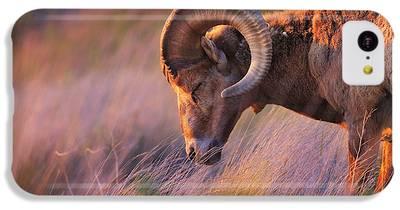 Goat iPhone 5C Cases