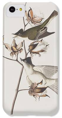Flycatcher iPhone 5C Cases
