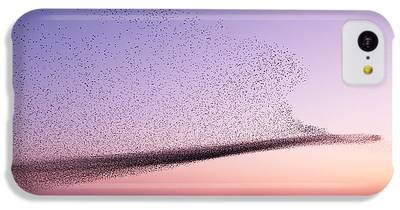 Starlings iPhone 5C Cases