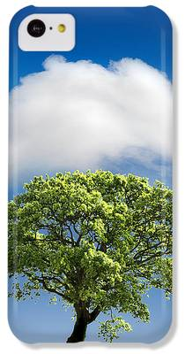 Tree IPhone 5c Cases