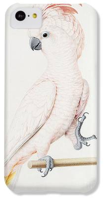 Parakeet iPhone 5C Cases