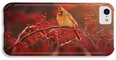 Cardinal iPhone 5C Cases