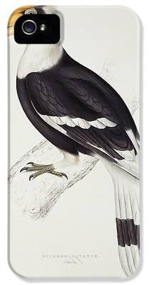 Hornbill iPhone 5s Cases