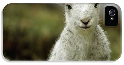 Sheep iPhone 5s Cases